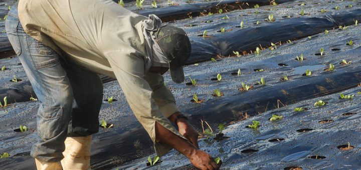 Agricultura orgânica é fonte de renda para trabalhadores em Seropédica (RJ) / EBC